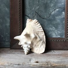 Vintage Conch Shell / Conch Seashell / Nautical Beach Decor / Seashell Decor / Wedding Decor by Untried on Etsy