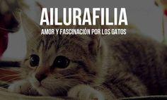 Ailurafilia: amor y fascinación por los gatos.