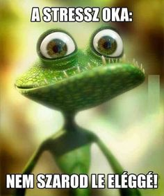 Frog-lizard Picture cartoon, lizard, frog) ★ Find more at… Funny Lizards, Funny Frogs, Funny Animals, Cute Animals, Frog Pictures, Pictures Images, Funny Pictures, Cute Monsters, Little Monsters