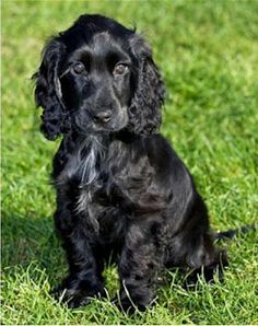 If any one could get me him for Christmas they will be m favourite person for ever!