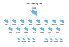 More About the Filesystem Hierarchy Standard   Section 1: Linux Filesystem Basics   LFS101x Courseware   edX