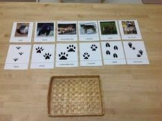 winter animals, links to where she found all of her printables (love these animal tracks)