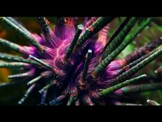 Washed Out made a beautiful video, you may think that you are watching National Geographic! Clips Music, Music Film, Art Music, Music Songs, Indie Pop, Indie Music, Great Music Videos, Good Music, Jungle Video