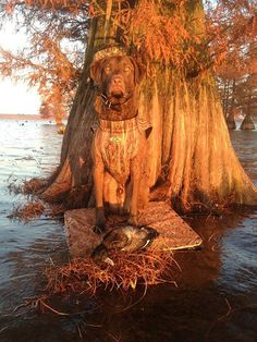 Rigger, a Chesapeake Bay retriever from Robertville, South Carolina