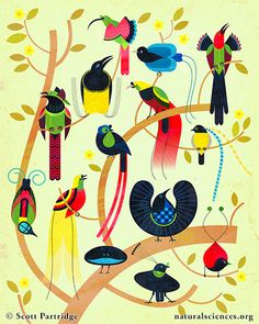 "Birds-of-Paradise by Scott Partridge. Print on Canvas, 16""x20"" http://naturalsciences.org/museum-store/featured-products $185"