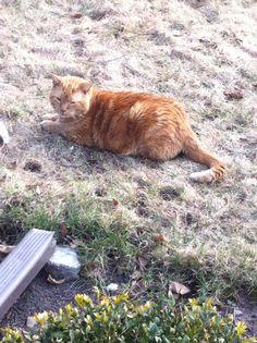 Rusty enjoying his new yard.