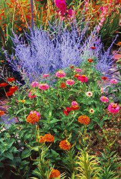 Featuring Russian sage and zinnias Garden Mum, Garden Oasis, Love Garden, Mexican Sage, Russian Sage, Garden Inspiration, Garden Ideas, Sun Perennials, Plant Therapy