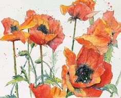 FIESTA Original 14 x 11 Watercolor Poppy by PatriciaHendersonArt