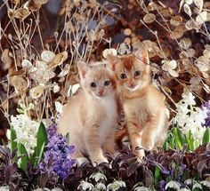 Too cute of a kittens