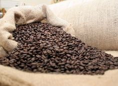 5lb Bolivian Primera Organic Fairtrade Coffee Beans. Quality and savings are in the bag!