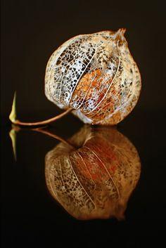 seed pod inside