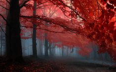 Earth - Forest  - Trees - Scenery - Red - Background - Backgrounds Wallpaper