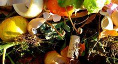 [Blog] Was darf auf den Kompost, was nicht? Abfälle richtig kompostieren - http://www.garten-freunde.com/abfaelle-kompostieren/304