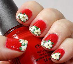 Poinsettias!