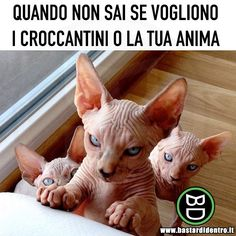 Under The Same Stars And Moon We are so in love with the past, we forget to get . Stupid Animals, Cute Funny Animals, Animals And Pets, Funny Cats, Funny Scenes, Funny Phrases, Arte Disney, Lol, Funny Video Memes