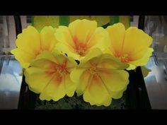 Aurora Giant Paper Flower - YouTube
