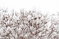 White forest by Lunica on Etsy