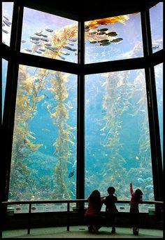 aquarium in usa - amazing