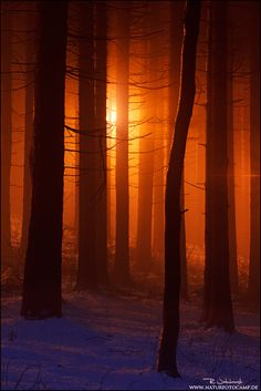 ~~Sunforest ~ Bavaria by Radomir Jakubowski~~