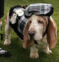 Celtic Basset Hound