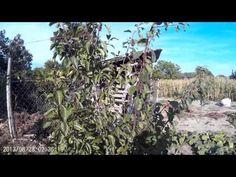 Vineyard, Youtube, Outdoor, Outdoors, Vine Yard, Vineyard Vines, Outdoor Games, Outdoor Life, Youtubers