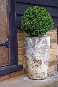 Container Gardening : Growing plants and vegetables in containers and pots