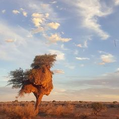 . . . . . @roelinedaneel @dewetrooyen @helenevt @elsabe_daneel #namibia #koës #sunset #landscapes #landscapeshot #travel #instalike #instagood  #instadaily Insta Like, Shots, Travel, Sunset, Landscape, Animals, Instagram, Viajes, Scenery