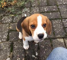 The Happy Beagle And Kids Beaglesdaily Beaglelabmix
