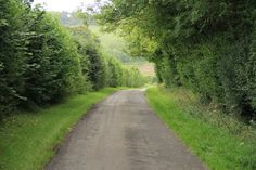 Lane in English countryside