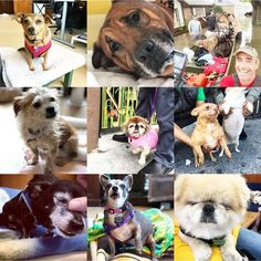 The most popular sugar faces on IG #seniordogs