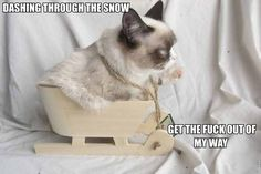 I'm so obsessed with Grumpy Cat! I want six just like her.12 Days Of Grumpy Cat Christmas