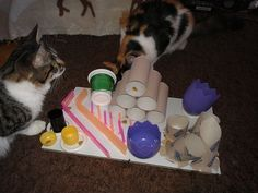Selbstgebaute Fummelbox - Katzenspielzeug - Bunte Katzenwelt | Feliway - das Geheimnis glücklicher Katzen