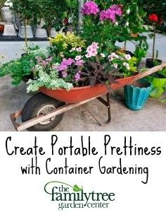 Nice Capture The Beauty With Container | The Family Tree Garden Center