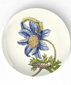 1600's botanical artwork II - reproduced on 10 inch Melamine Plate with a softly aged off-white background