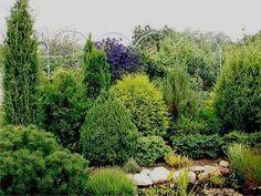 как создать хвойный сад - Поиск в Google