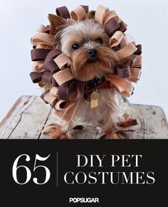 Instant stress relief = looking at these EXTREMELY cute photos of pets in costumes.