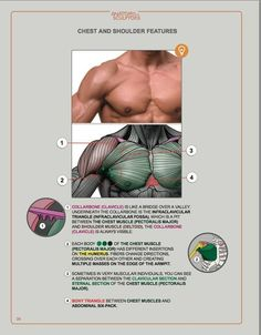 Book: Anatomy for Sculptors Understanding the Human Form