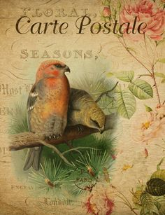 View Image, Vintage Floral, Free Images, Photos, Pictures, Bird, Painting, Painting Art, Paintings