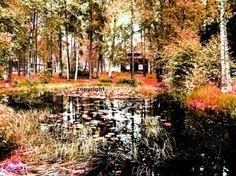 Den hemmelige skogen - canvaslerretsbilde A4 str. A4, Pictures
