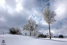It's white all around at the #Cedars <3 By Jack Seikaly  #Lebanon #WeAreLebanon