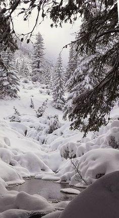 Beleza natural do inverno.  Fotografia: Dreamy Nature.