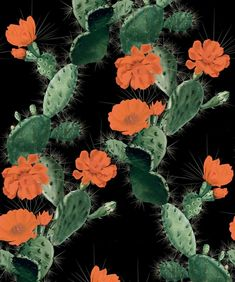 This Alluring Cactus wallpaper features sprouts of magnificent flowers and decorated in splendid long sharp spines. FREE shipping. Shop with Afterpay! Cute Fall Wallpaper, King Design, Sprouts, Cactus, Indie, Wallpapers, Bright, Free Shipping, Flowers