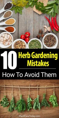 10 Herb Gardening Mistakes And How To Avoid Them - - Growing an herb garden is easy and a great way to get started gardening. However, mistakes can be made. This article looks at 10 herb gardening mistakes. Indoor Vegetable Gardening, Home Vegetable Garden, Hydroponic Gardening, Organic Gardening, Container Gardening, Urban Gardening, Herb Garden Design, Diy Herb Garden, Garden Ideas
