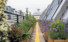 Coutts in London has a great skyline garden. There are lot of colorful rooftop gardens in the city, and more are popping up all the time.