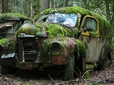 Old decaying Abandoned car covered in moss and foliage.