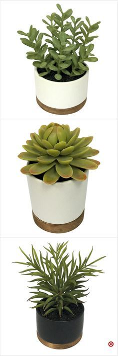 Shop Target for artificial plant you will love at great low prices. Free shipping on orders of $35+ or free same-day pick-up in store.