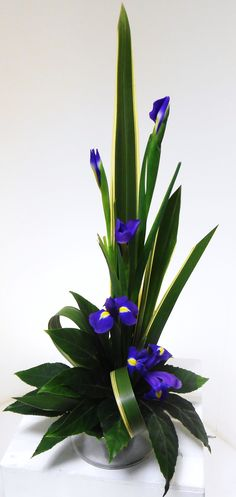 linear iris arrangement
