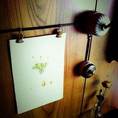 デンマークの植物図鑑の1頁。