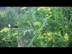 CRMPI forest garden food forest at elevation in the rocky mountains. Permaculture, Growing Food, Garden Tours, Permaculture Magazine, Garden, Natural Farming, Forest Garden, Hardscape, Sustainable Agriculture