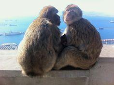 My Friends, Gibraltar UK